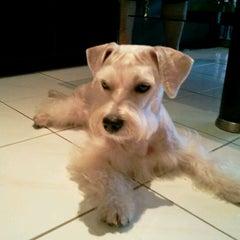 Photo taken at Asean Puppy by Winnie T. on 10/4/2011