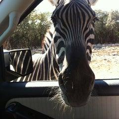 Photo taken at Natural Bridge Wildlife Ranch by Lindsay S. on 11/11/2011