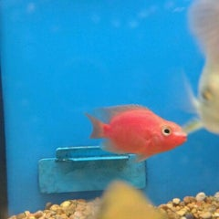 Photo taken at Petco by Taylor C. on 6/13/2012