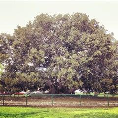 Photo taken at Moreton Bay Fig Tree by Matthew G. on 6/12/2012