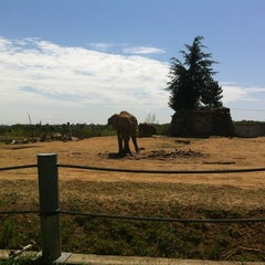 Photo taken at Safari de Peaugres by Denis d. on 7/28/2012