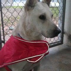 Photo taken at Town Lake Animal Shelter by Mitch N. on 12/10/2011