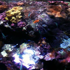 Photo taken at Acquario Civico by Silvia M. on 7/28/2012