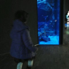 Photo taken at Acquario Civico by Marica G. on 11/12/2011