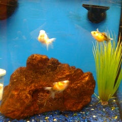 Photo taken at Petco by Albert P. on 7/7/2012