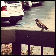 Photo taken at Jason's Deli by Jessica M. on 6/6/2012