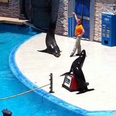 Photo taken at Sea Lion and Otter Stadium by Amber R. on 6/25/2011