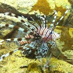Photo taken at Texas State Aquarium by Matthew W. on 1/21/2011