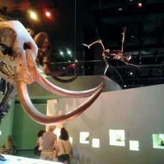Photo taken at Houston Museum of Natural Science by John B. on 9/8/2012