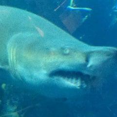 Photo taken at South Carolina Aquarium by Hannah P. on 9/5/2011