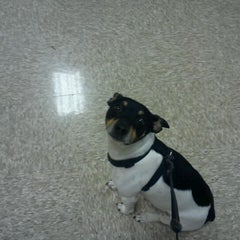 Photo taken at PetSmart by Sunny ❀ {. on 11/26/2011