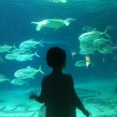 Photo taken at Adventure Aquarium by Leslie J. on 8/4/2012