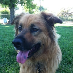 Photo taken at Sepulveda Basin Off-Leash Dog Park by Danny D. on 8/23/2011