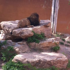 Photo taken at ABQ BioPark Zoo by Deborah D. on 4/13/2012