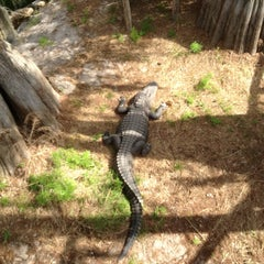 Photo taken at Tallahassee Museum by Barbara F. on 3/24/2012
