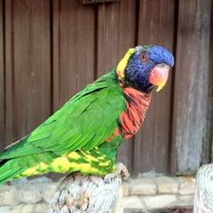 Photo taken at San Antonio Zoo by V e r o n i c a on 6/12/2012