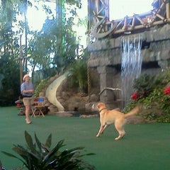 Photo taken at Animal Actors on Location! by Ana P. on 12/24/2011