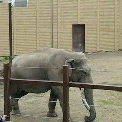 Photo taken at Calgary Zoo by Tina J. on 6/9/2012