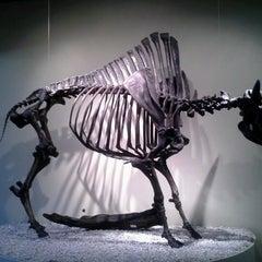 Das Foto wurde bei Page Museum at the La Brea Tar Pits von Jnet L. am 8/26/2012 aufgenommen
