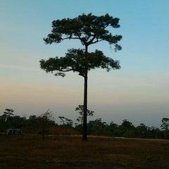 Photo taken at อุทยานแห่งชาติภูหินร่องกล้า (Phu Hin Rong Kla National Park) by Piriyapan H. on 1/6/2012