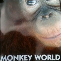 Photo taken at Monkey World - Ape Rescue Centre by Benjii on 8/11/2011