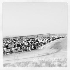 Photo taken at Harris Ranch Cattle Yards by helkimchee on 4/8/2012