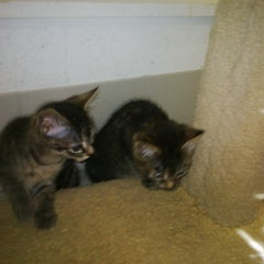 Photo taken at Ipswich Animal Shelter - Ipswich Humane Group by Josh G. on 6/12/2011