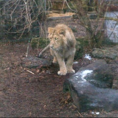 Photo taken at The Lions by Virginia A. on 2/10/2012