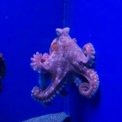 Photo taken at Maui Ocean Center, The Hawaiian Aquarium by Toby B. on 8/24/2011