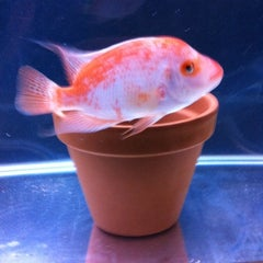 Photo taken at Fish Tank Maintenance Time by Mike ⚽⚽ on 6/9/2012