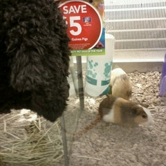 Photo taken at Petco by Becky K. on 6/20/2012