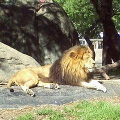 Photo taken at Houston Zoo by Karla B. on 3/23/2012