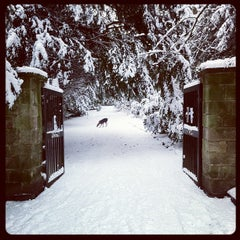 Photo taken at Darley Park by Colin M. on 2/5/2012