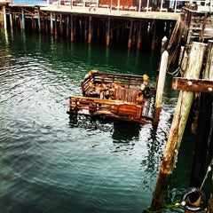 Photo taken at Sea Lion Observatory Deck by Joel S. on 7/22/2012