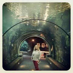 Photo taken at Oregon Coast Aquarium by Ricky E. on 8/19/2012