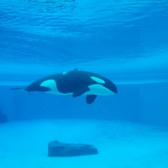 Photo taken at Marineland by Christopher A. on 8/9/2012