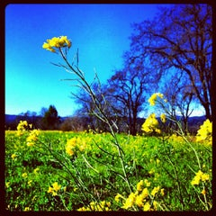 Photo taken at Rodney Strong Vineyards by Shana R. on 2/14/2012