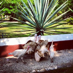 Photo taken at Hacienda Temozon by Enrique C. on 9/4/2012