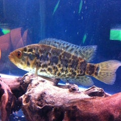 Photo taken at Fish Tank Maintenance Time by Mike ⚽⚽ on 6/23/2012