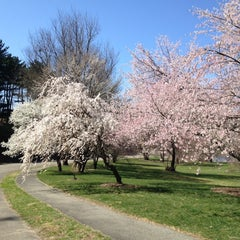 Photo taken at Arnold Arboretum by Allison L. on 3/27/2012