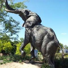 Photo taken at Saint Louis Zoo by Bryan V. on 9/8/2012