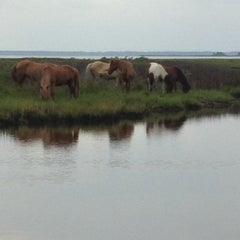 Photo taken at Assateague Island National Seashore (Maryland) by Julia on 8/6/2012