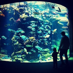 Photo taken at Steinhart Aquarium by Tom B. on 9/10/2012