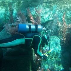 Photo taken at Finding Nemo Submarine Voyage by Jason S. on 4/6/2012