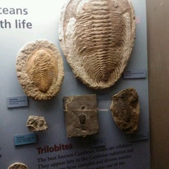 Photo taken at Sam Noble Oklahoma Museum of Natural History by Δ. S. on 2/13/2012