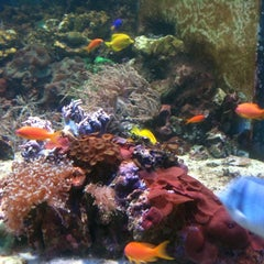 Photo taken at Sealife Centre by Mariana I. on 7/14/2012