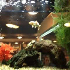 Photo taken at Sakura Japanese Restaurant by david l. on 5/12/2012