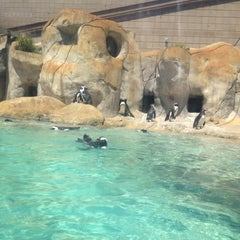 Photo taken at Tulsa Zoo by Delaney B. on 4/21/2012