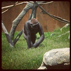 Photo taken at Calgary Zoo by Kevin L. on 6/24/2012