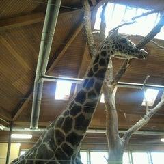 Photo taken at Giraffe House by Jennifer D. on 4/10/2012